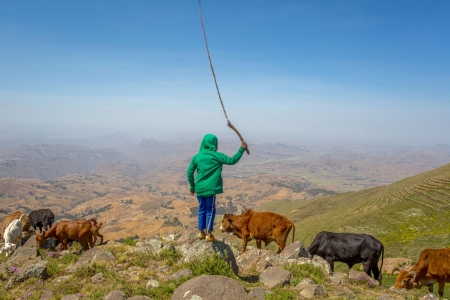 Ethiopian practices improve returns on massive investments in soil and water management