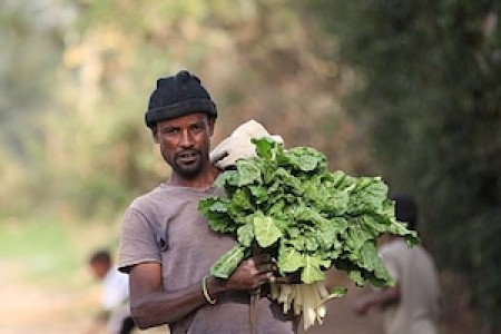 Urban farmer carrying greens from field in Addis Ababa