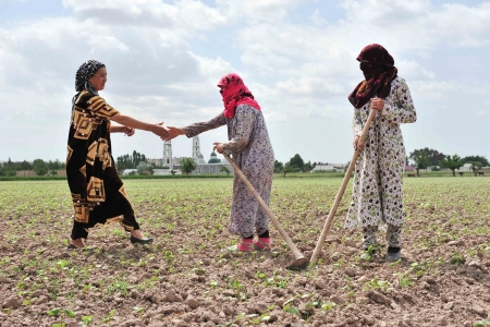 Women farming near a mosque in Tajikistan.