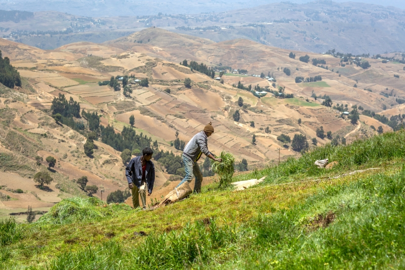 Farmers on Ethiopia's Yewol mountain work the newly restored fields.
