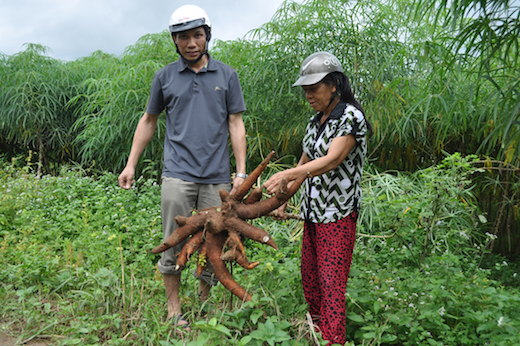 Villagers in Vietnam who took part in the pilot CPWF project look at their cassava crop. Photo: Olivier Joffre/WorldFish